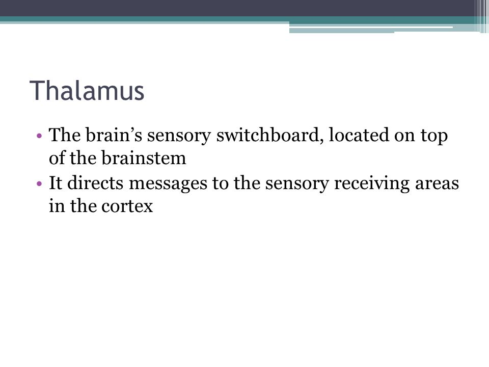 Thalamus The brain's sensory switchboard, located on top of the brainstem.