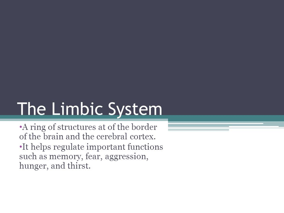 The Limbic System A ring of structures at of the border of the brain and the cerebral cortex.