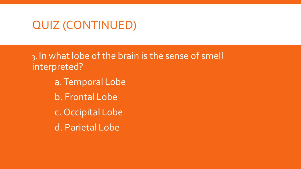 Quiz (Continued) a. Temporal Lobe b. Frontal Lobe c. Occipital Lobe