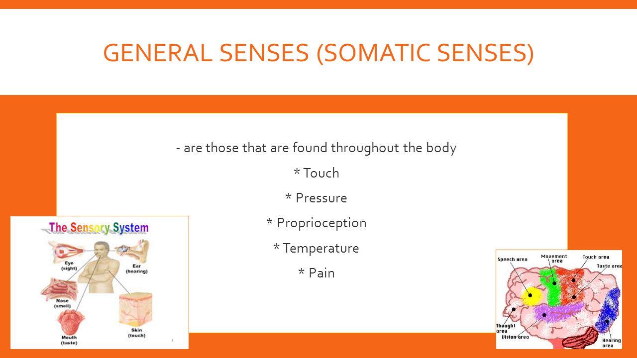 General Senses (Somatic Senses)