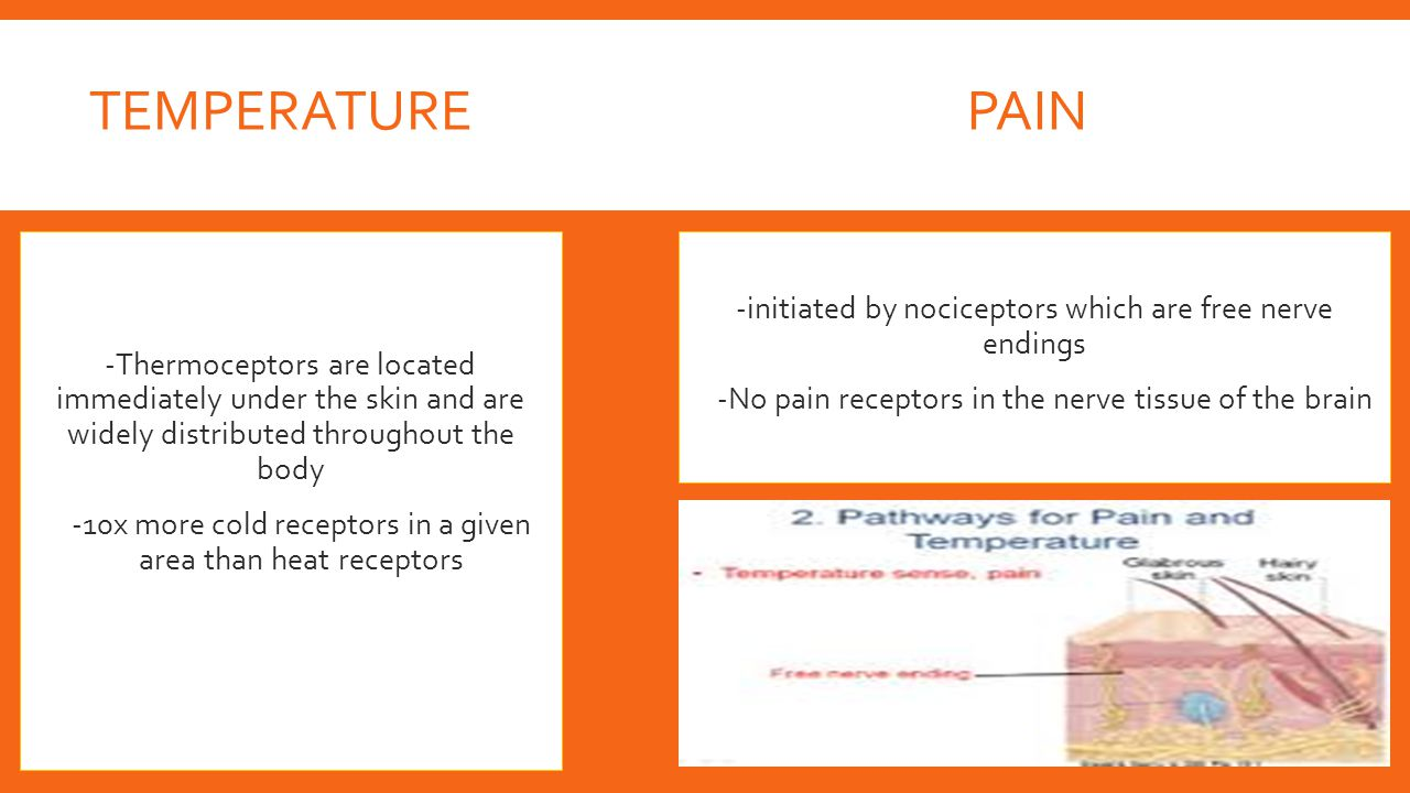 Temperature Pain. -Thermoceptors are located immediately under the skin and are widely distributed throughout the body.