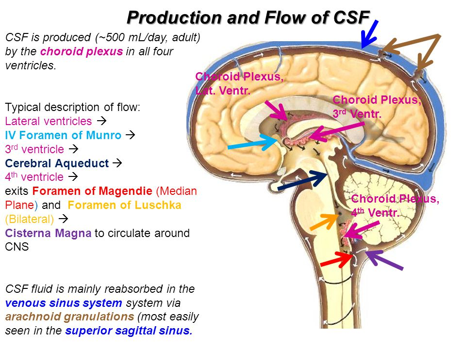 Production and Flow of CSF