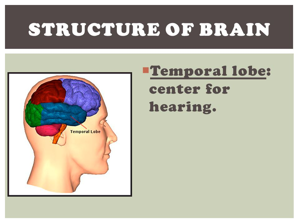 Structure of Brain Temporal lobe: center for hearing.