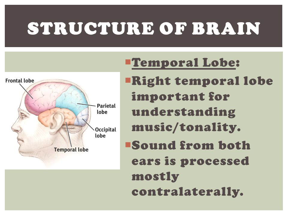 Structure of Brain Temporal Lobe: