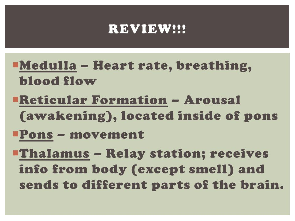 Review!!! Medulla – Heart rate, breathing, blood flow. Reticular Formation – Arousal (awakening), located inside of pons.