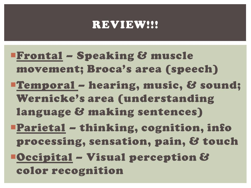 Review!!! Frontal – Speaking & muscle movement; Broca's area (speech)