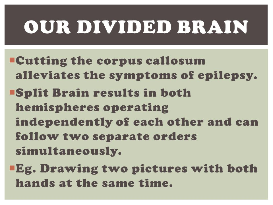 Our Divided brain Cutting the corpus callosum alleviates the symptoms of epilepsy.