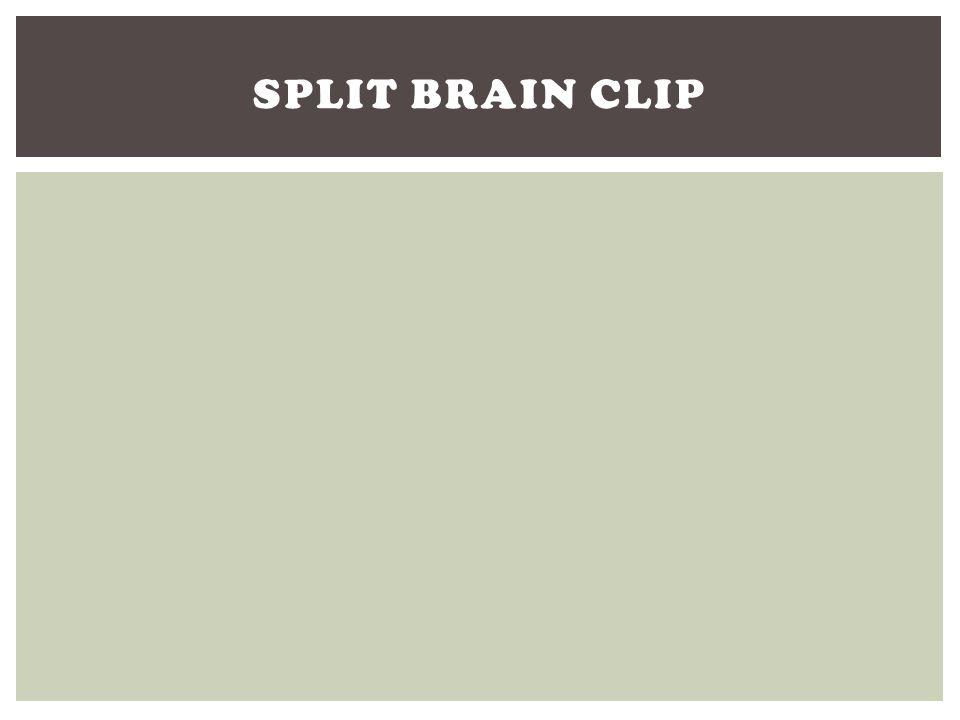 Split Brain Clip