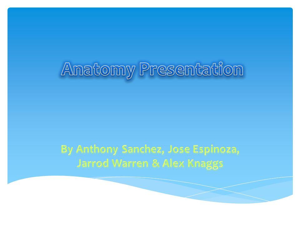 By Anthony Sanchez, Jose Espinoza, Jarrod Warren & Alex Knaggs