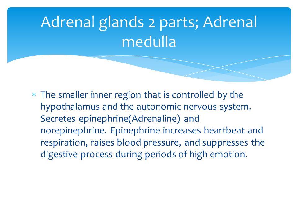 Adrenal glands 2 parts; Adrenal medulla