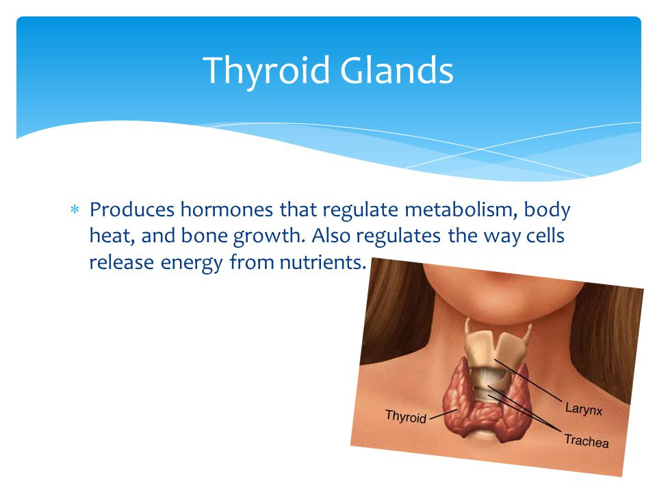 Thyroid Glands Produces hormones that regulate metabolism, body heat, and bone growth.