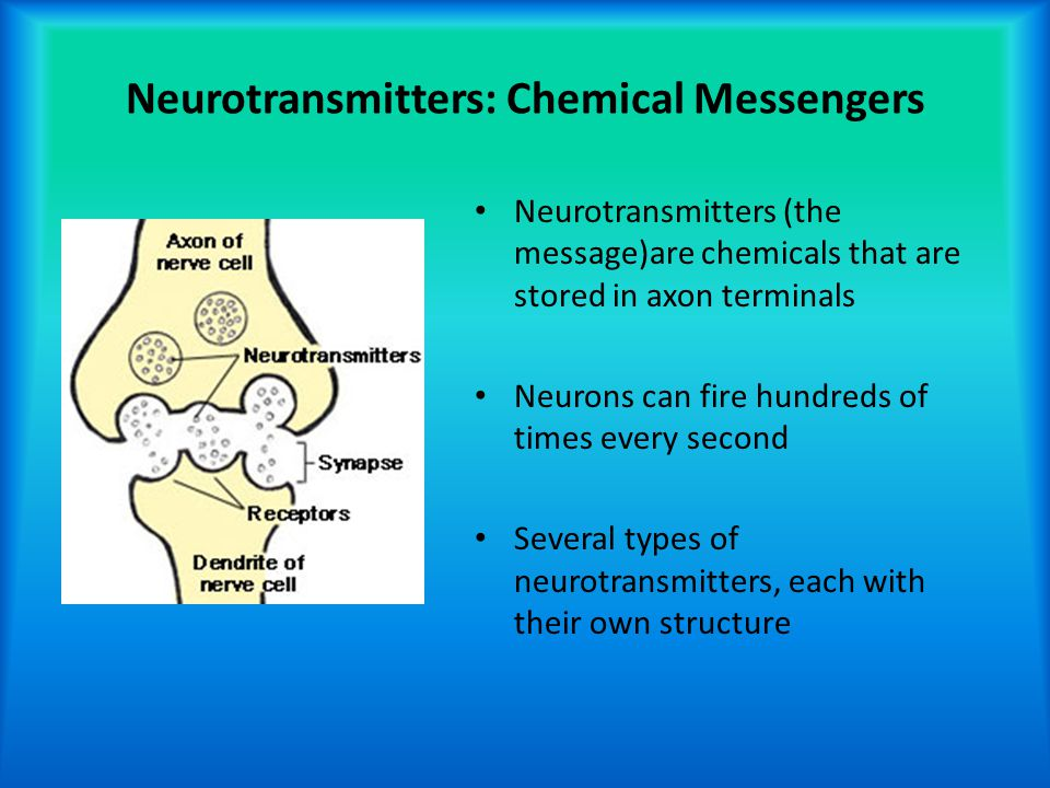 Neurotransmitters: Chemical Messengers