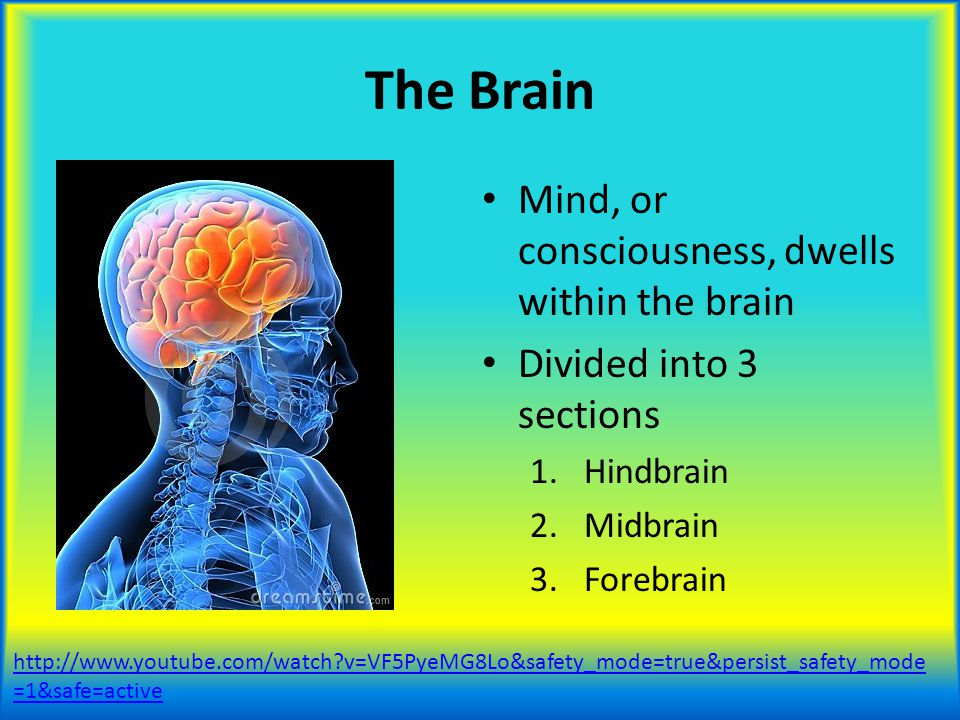 The Brain Mind, or consciousness, dwells within the brain
