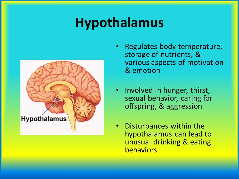 Hypothalamus Regulates body temperature, storage of nutrients, & various aspects of motivation & emotion.