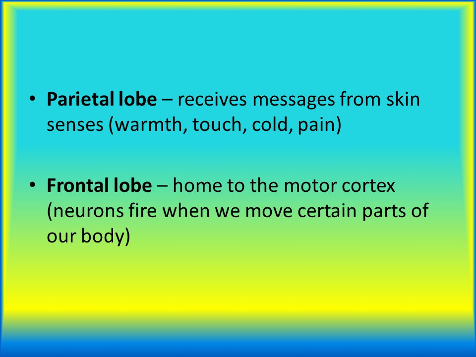 Parietal lobe – receives messages from skin senses (warmth, touch, cold, pain)