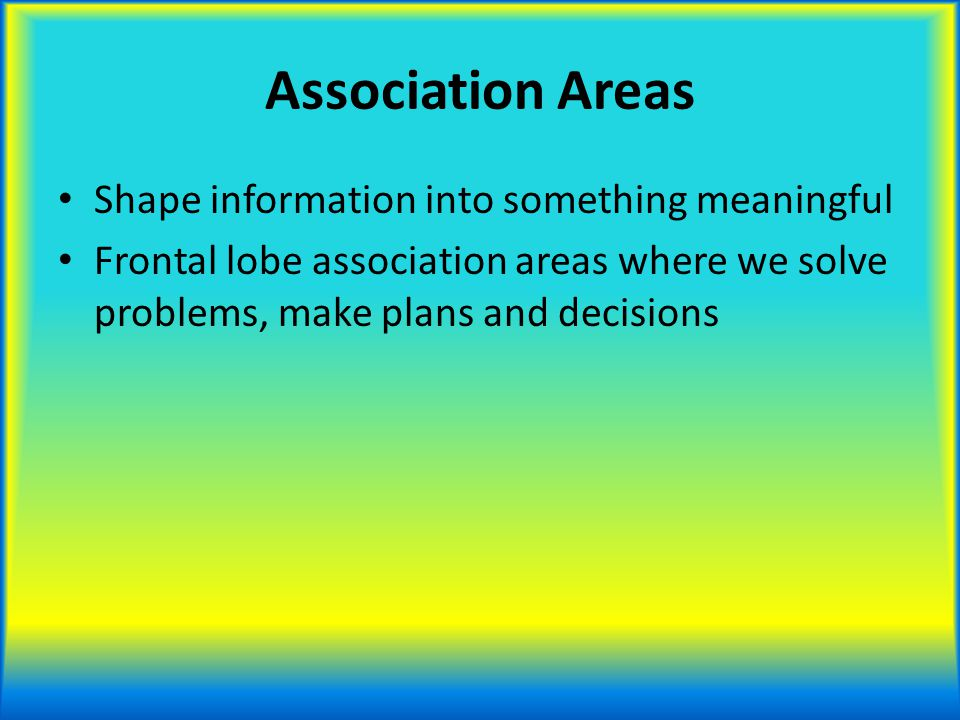 Association Areas Shape information into something meaningful