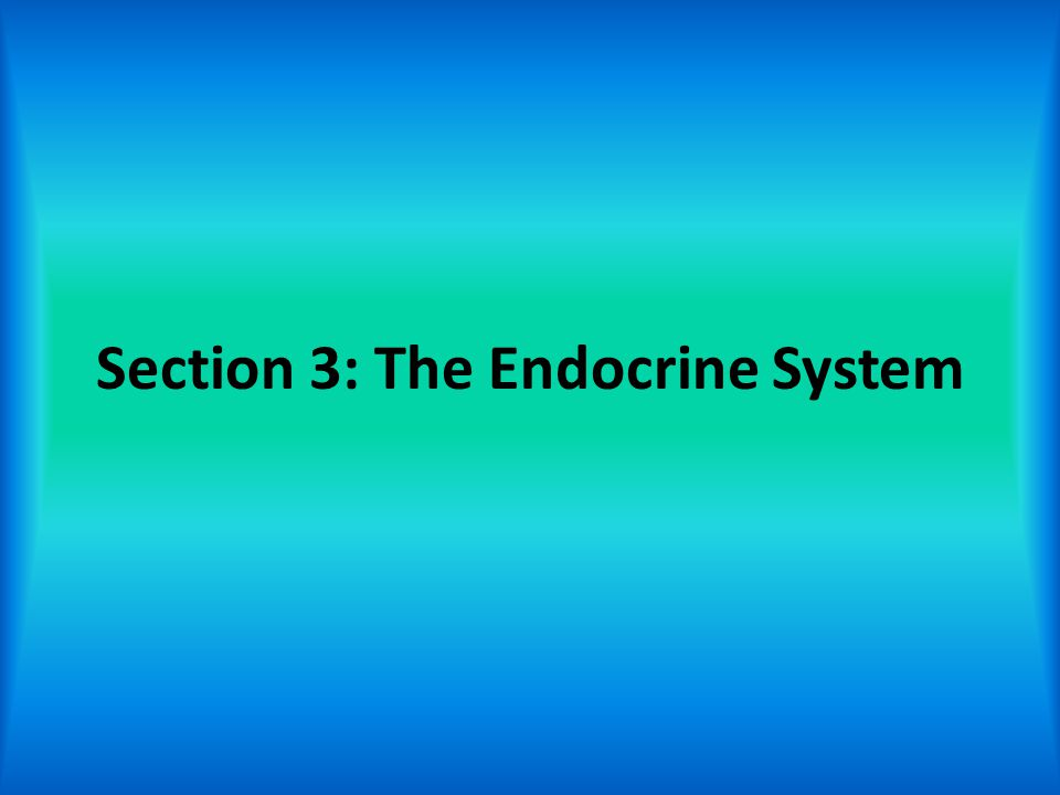 Section 3: The Endocrine System