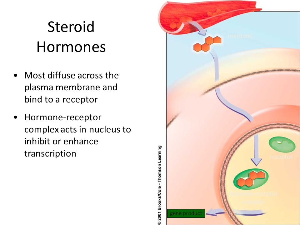 hormone-receptor complex