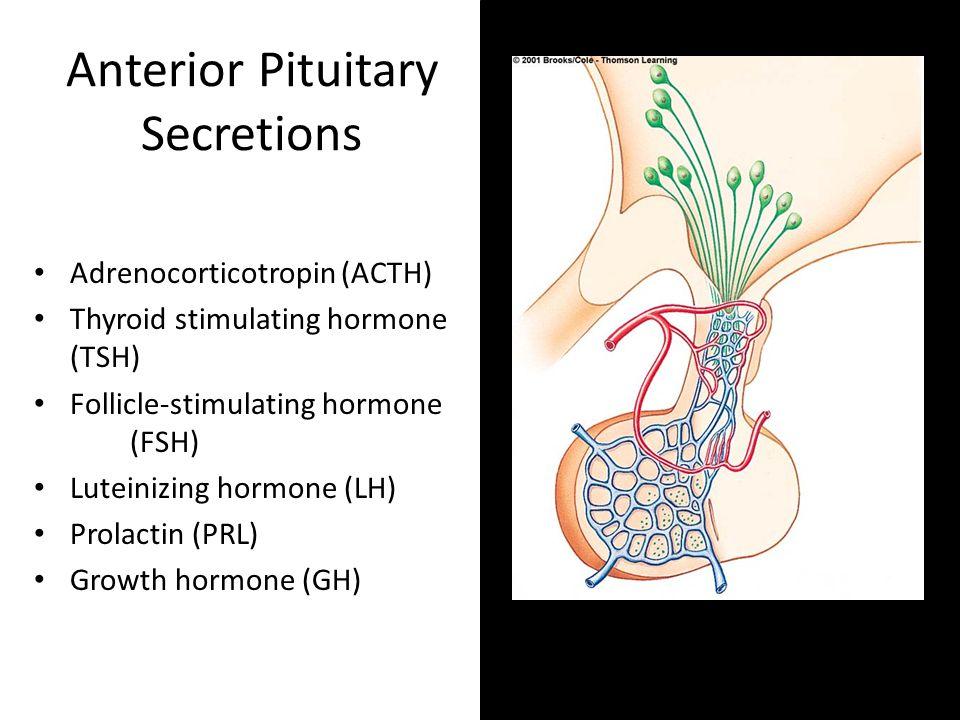 Anterior Pituitary Secretions