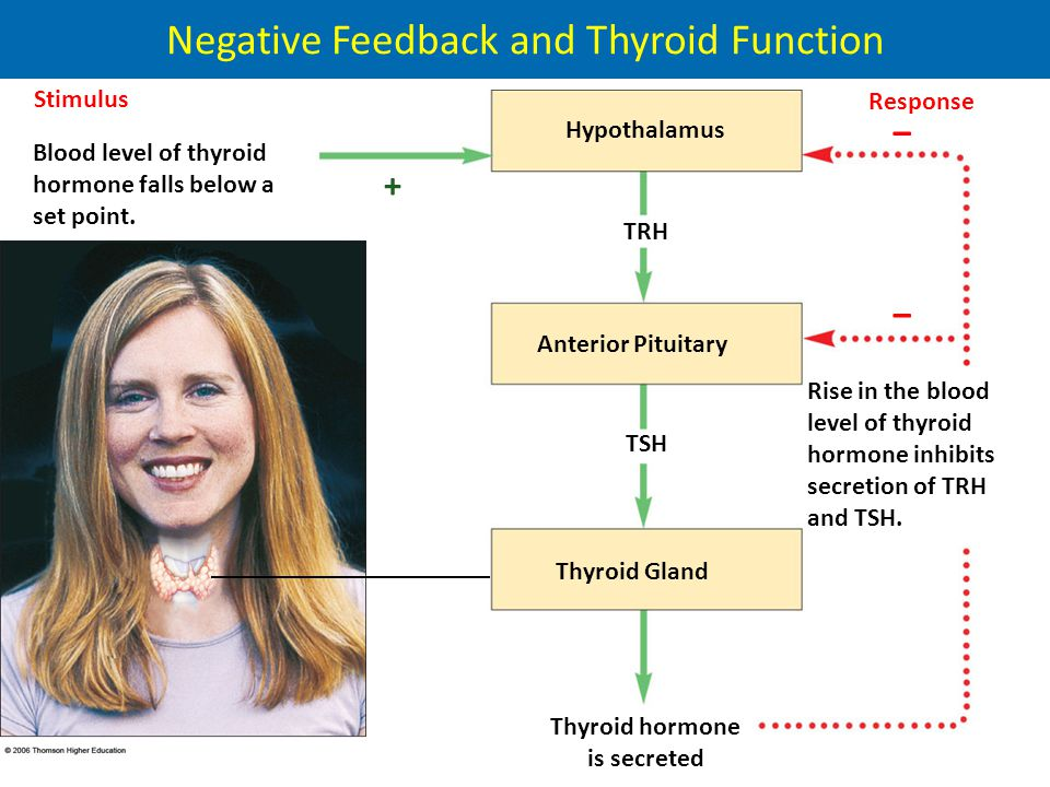 Negative Feedback and Thyroid Function