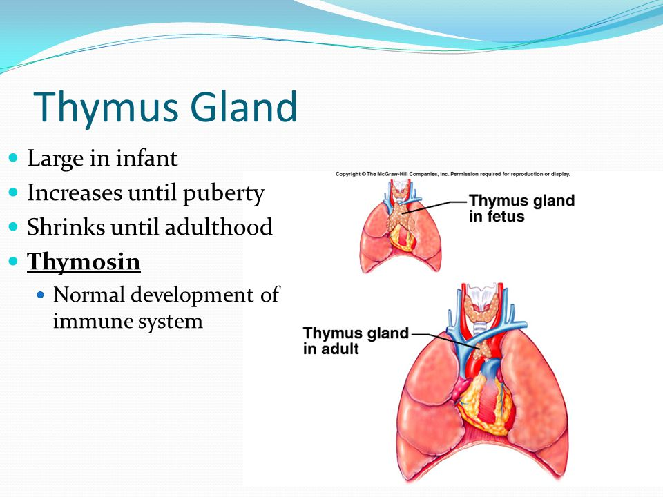Thymus Gland Large in infant Increases until puberty
