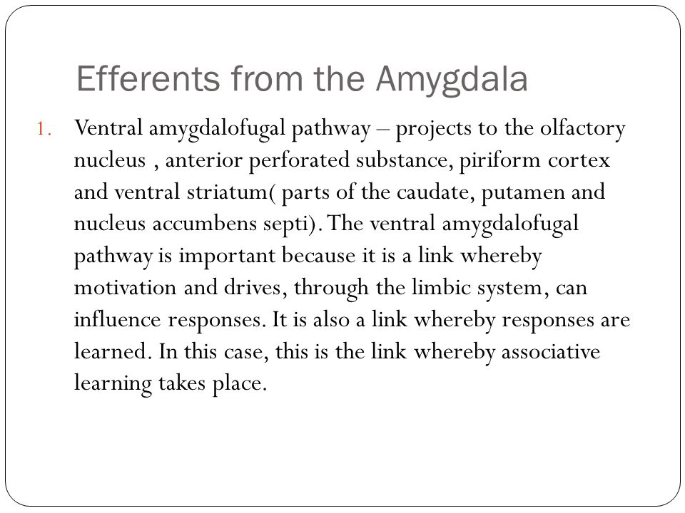 Efferents from the Amygdala
