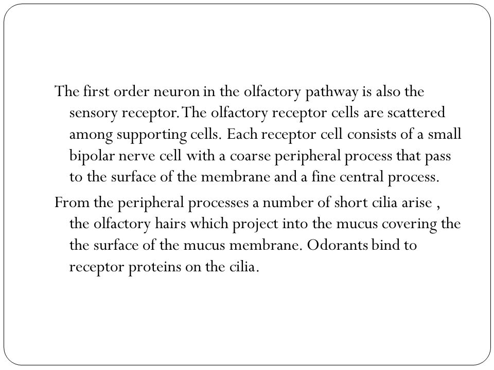 The first order neuron in the olfactory pathway is also the sensory receptor.