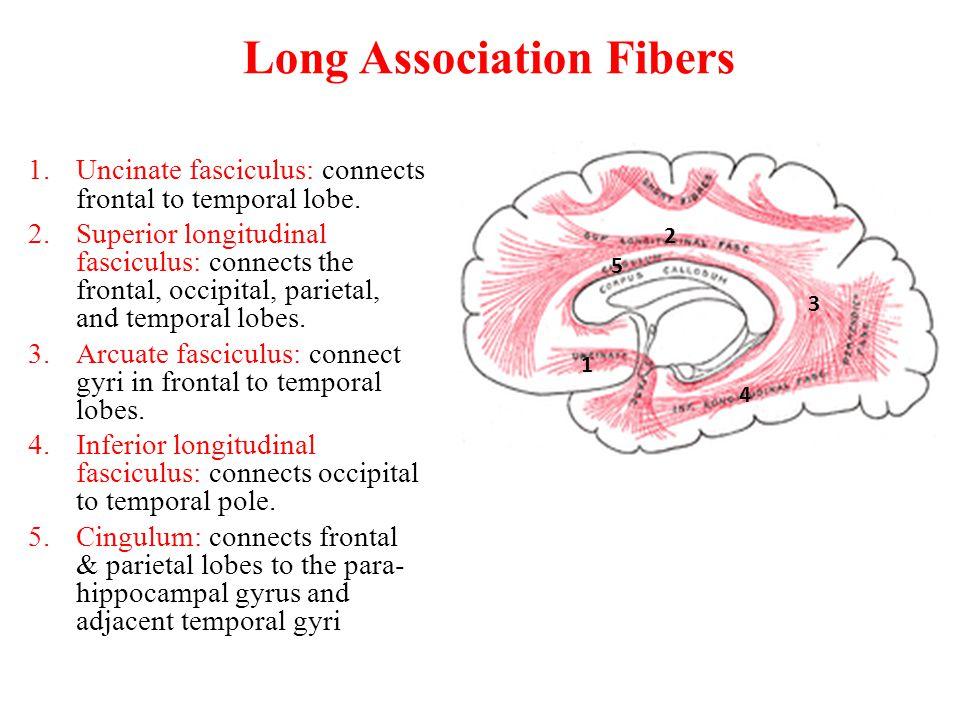 Long Association Fibers