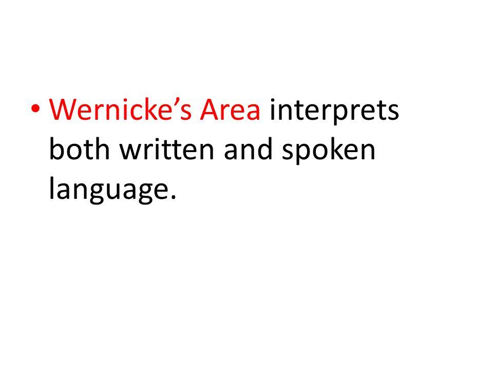 Wernicke's Area interprets both written and spoken language.