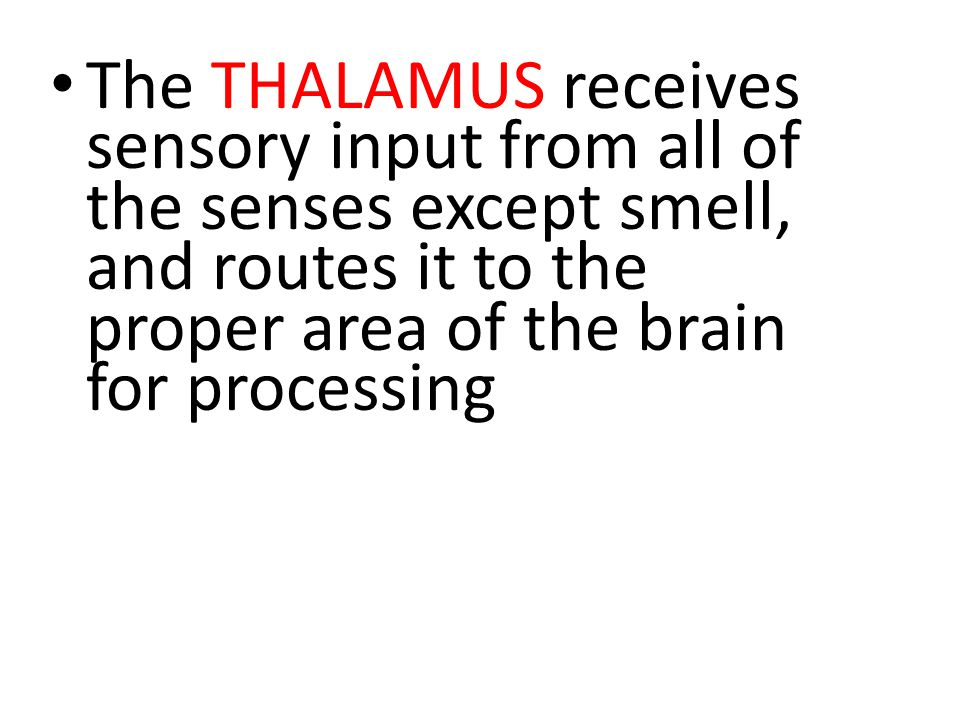 The THALAMUS receives sensory input from all of the senses except smell, and routes it to the proper area of the brain for processing