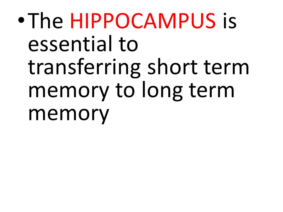 The HIPPOCAMPUS is essential to transferring short term memory to long term memory
