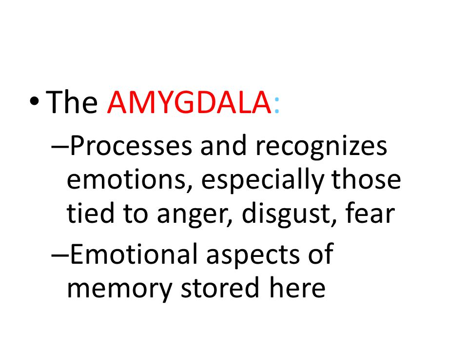 The AMYGDALA: Processes and recognizes emotions, especially those tied to anger, disgust, fear.