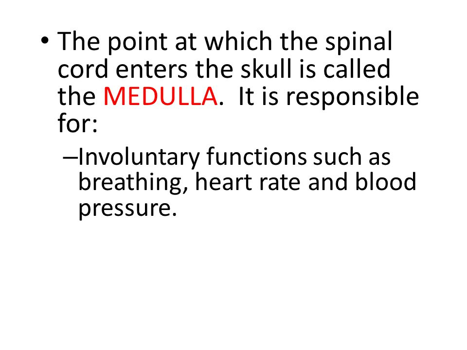 The point at which the spinal cord enters the skull is called the MEDULLA. It is responsible for: