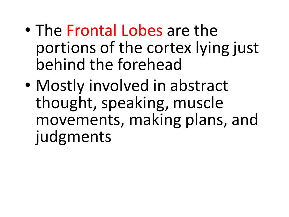 The Frontal Lobes are the portions of the cortex lying just behind the forehead