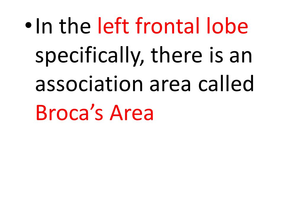 In the left frontal lobe specifically, there is an association area called Broca's Area