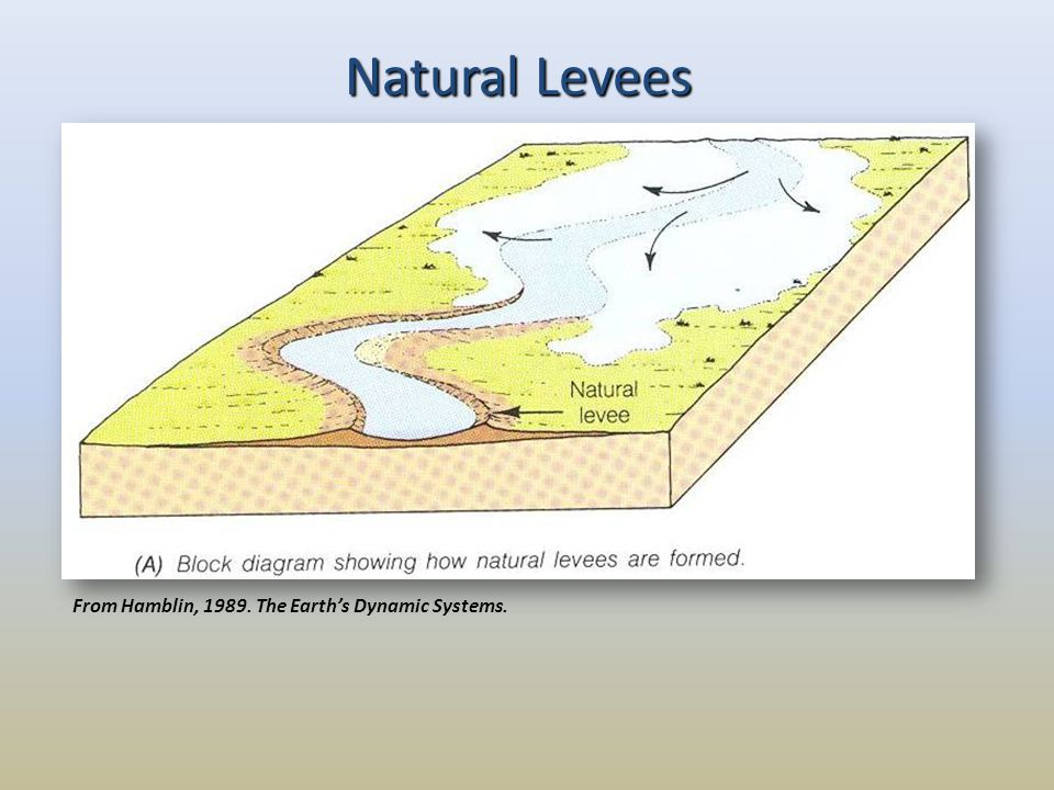 Natural Levees From Hamblin, 1989. The Earth's Dynamic Systems.