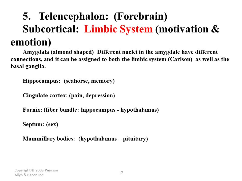 5. Telencephalon: (Forebrain)