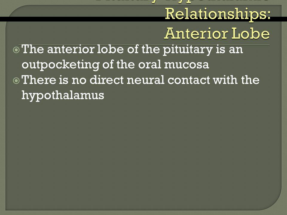 Pituitary-Hypothalamic Relationships: Anterior Lobe