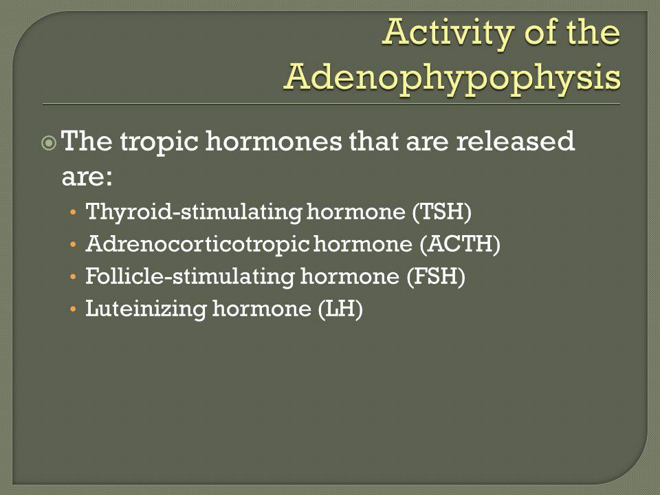 Activity of the Adenophypophysis