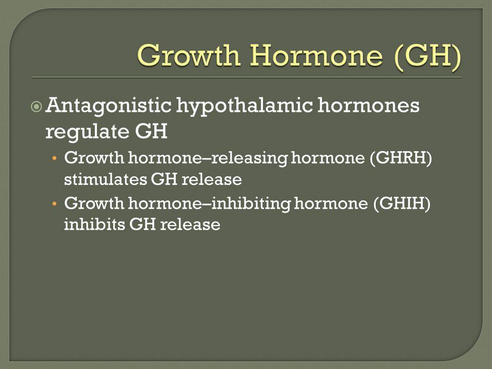 Growth Hormone (GH) Antagonistic hypothalamic hormones regulate GH