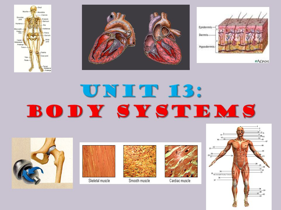 UNIT 13: Body Systems