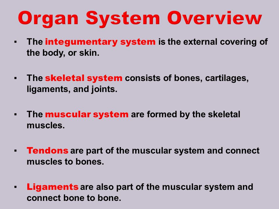 Organ System Overview The integumentary system is the external covering of the body, or skin.