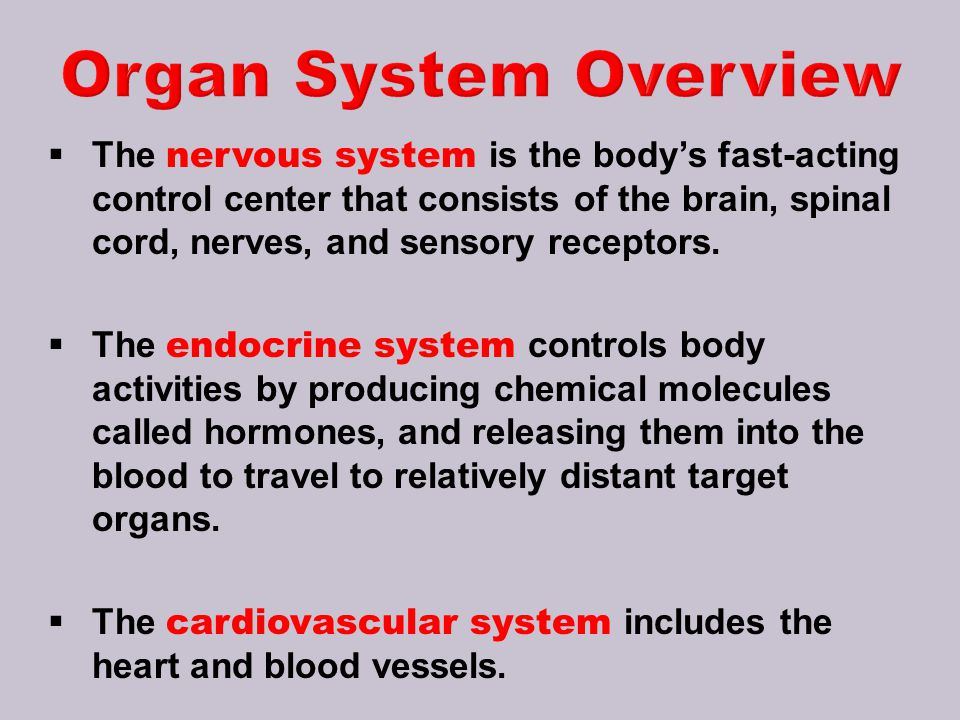 Organ System Overview