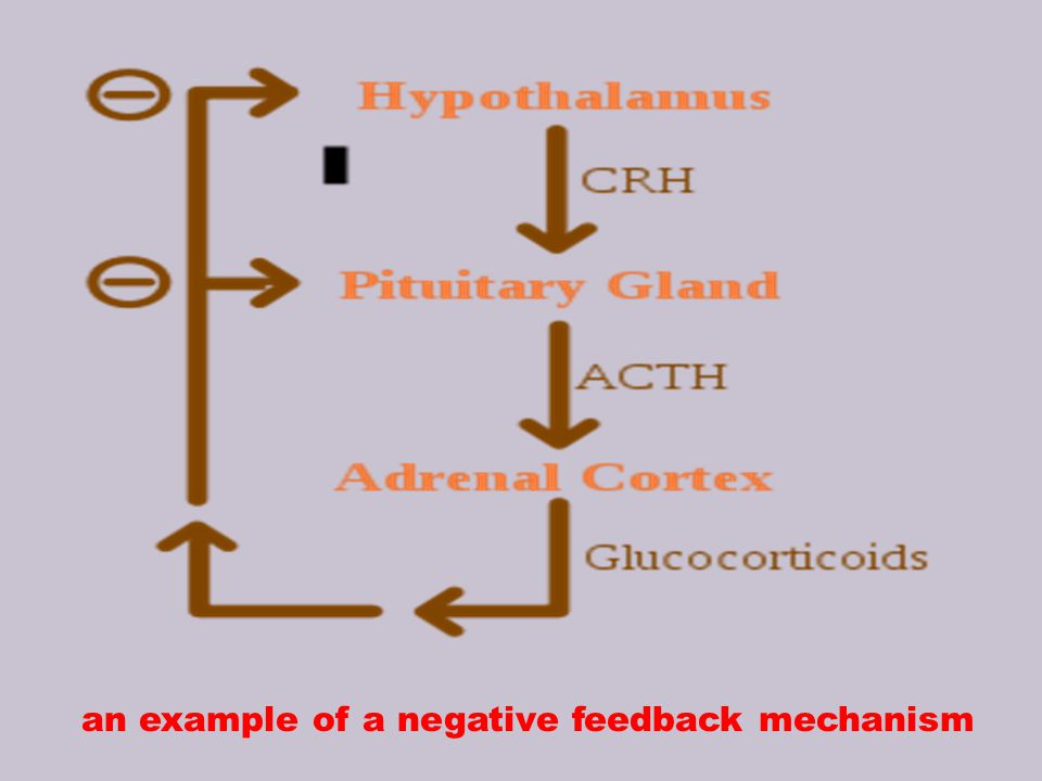 an example of a negative feedback mechanism