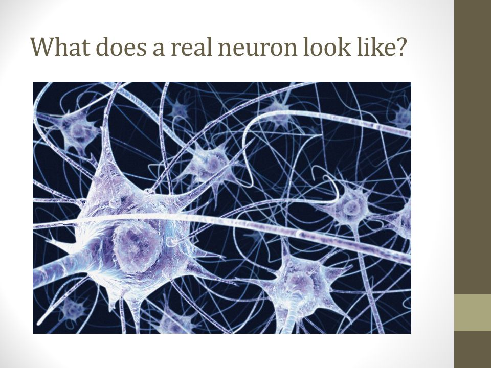 What does a real neuron look like