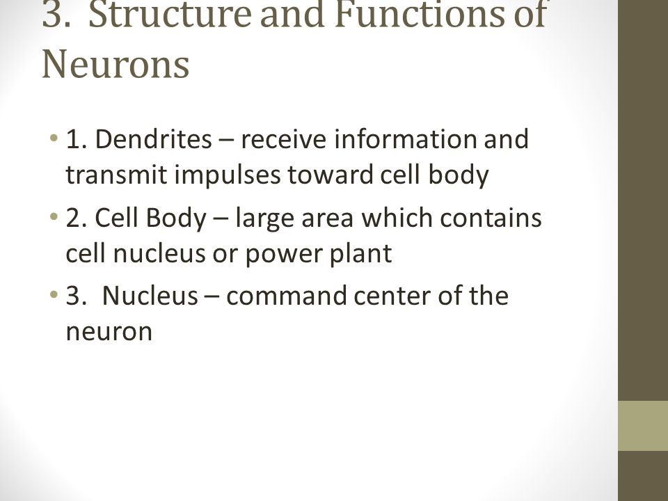 3. Structure and Functions of Neurons