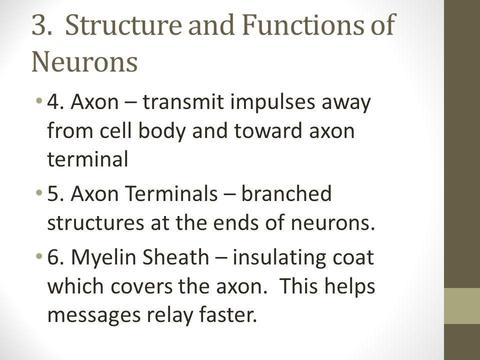 4. Axon – transmit impulses away from cell body and toward axon terminal