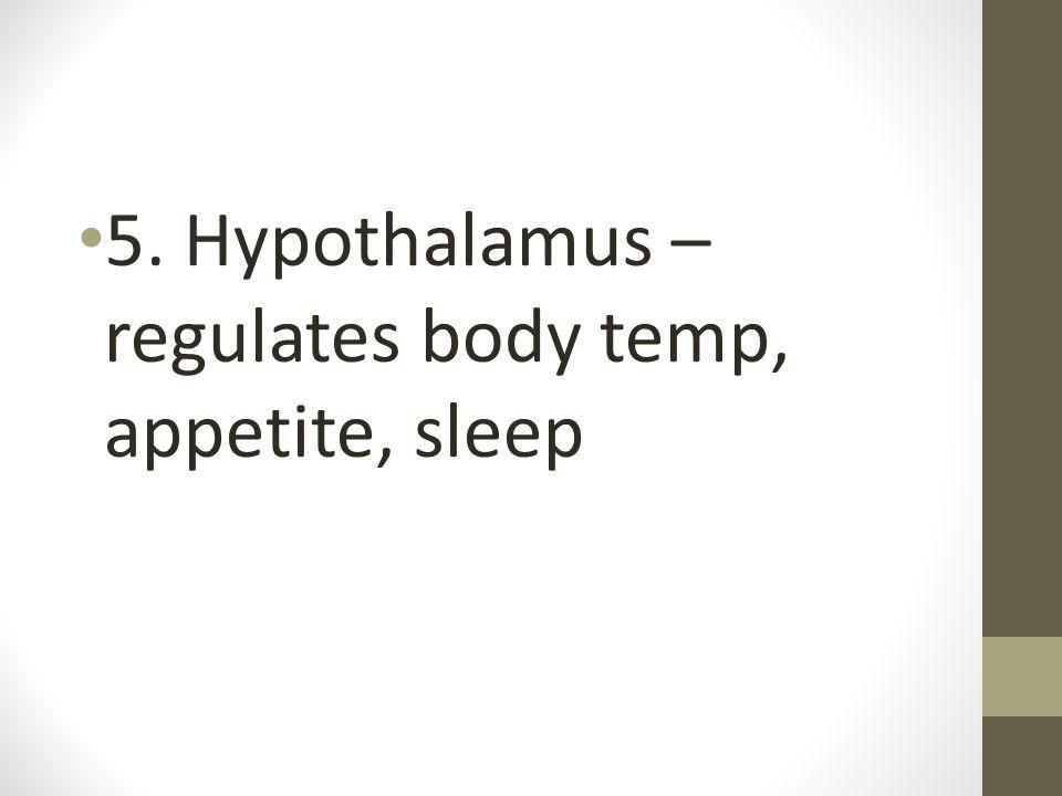 5. Hypothalamus – regulates body temp, appetite, sleep