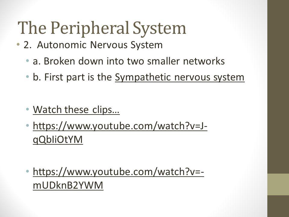 The Peripheral System 2. Autonomic Nervous System