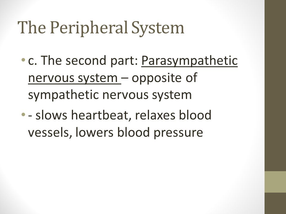 The Peripheral System c. The second part: Parasympathetic nervous system – opposite of sympathetic nervous system.